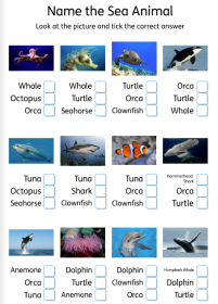 Name the sea Creature identification worksheet